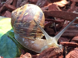 2016Aug9Snail1SMALL