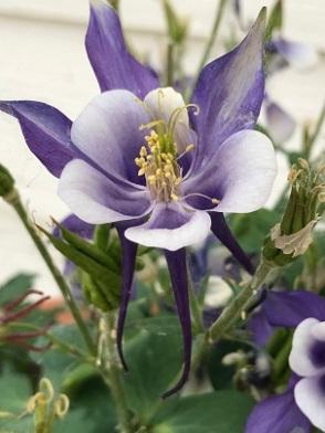PurpleFlower2018June3SMALL
