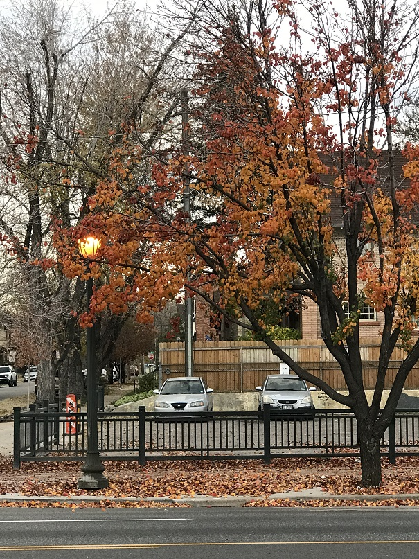 2018Oct29AutumnFoliage1SMALL