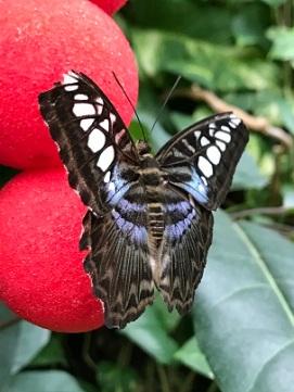 ButterflyOnRedBalls2019Feb14SMALL