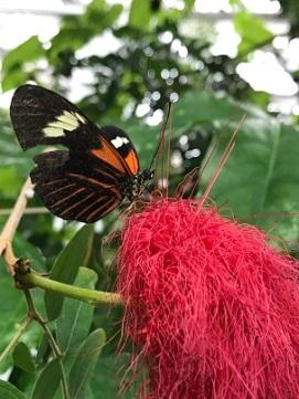 ButterflyPerchedOnPinkMop2019Feb14SMALL